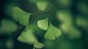 Green Macro Leaves Plants Branch 2560x1600 Wallpaper