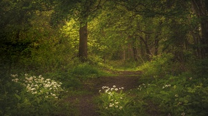 Flower Forest Greenery Path 3840x2160 Wallpaper
