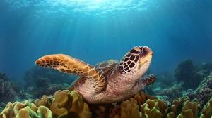 Coral Sea Life Sunbeam Turtle Underwater 2048x1365 Wallpaper