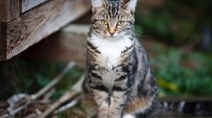 Cat Pet 3721x2658 wallpaper