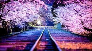 Cherry Blossom Night 1920x1080 wallpaper