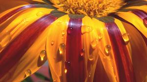 Photography Flowers Macro Vertical 2448x2974 wallpaper