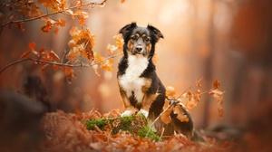 Fall Pet 2048x1356 Wallpaper