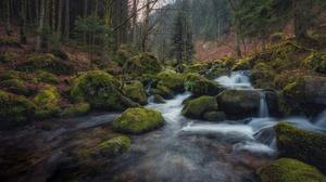 Moss Nature River Rock 7952x5304 Wallpaper