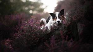 Dog Pet 2047x1317 Wallpaper