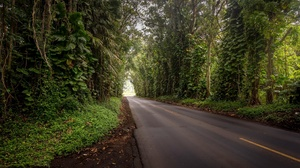 Forest Nature Road 2048x1250 Wallpaper