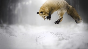 Depth Of Field Fox Jump Snow Wildlife Winter 2048x1365 Wallpaper