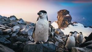 Penguin Rock Wildlife 2048x1478 Wallpaper