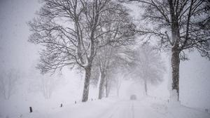 Road Snow Winter Storm Trees Car Nature Landscape 2560x1440 Wallpaper