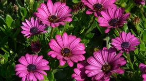 Daisy Earth Flower Purple Flower 3000x2250 Wallpaper