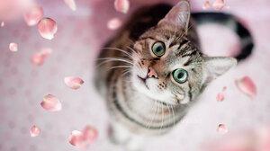 Cat Cute Green Eyes 2048x1365 wallpaper