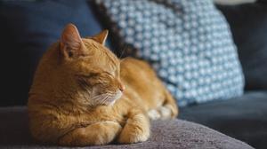 Cat Pet Sleeping 1920x1271 wallpaper