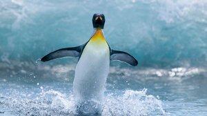 Bird Penguin 1920x1200 Wallpaper