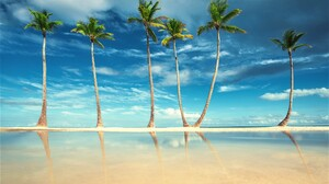 Earth Horizon Ocean Palm Tree Sea Tree 2000x1334 Wallpaper