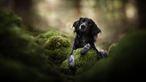 Pet Depth Of Field Moss 2048x1363 Wallpaper