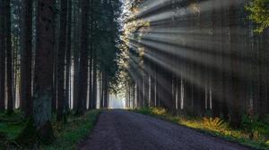 Forest Road Sunbeam 3840x2160 Wallpaper