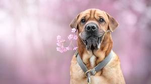 Dog Pet 6000x4000 Wallpaper