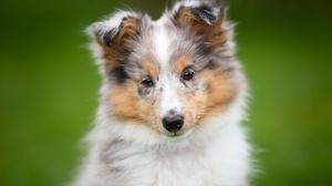 Dog Pet Baby Animal Puppy 3000x2000 wallpaper