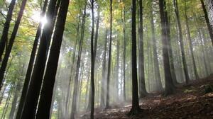 Czech Republic Fall Fog Forest Sunbeam 5152x3864 Wallpaper