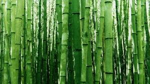 Bamboo Green Nature 1920x1200 Wallpaper