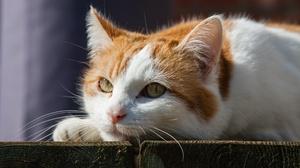Cat Pet 3406x2271 Wallpaper