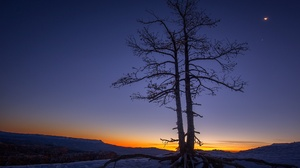 Tree Sunset 2048x1365 Wallpaper