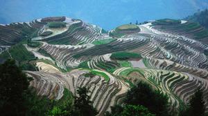 Terraced Field Landscape China 2560x1440 wallpaper
