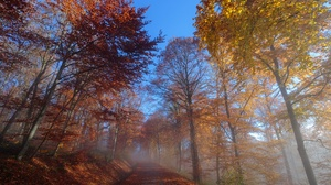 Dirt Road Fall Fog Foliage Forest Nature Tree 2048x1365 wallpaper