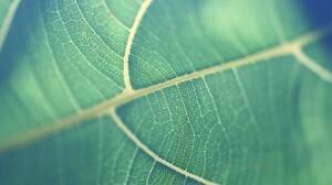 Earth Leaf 2560x1600 Wallpaper