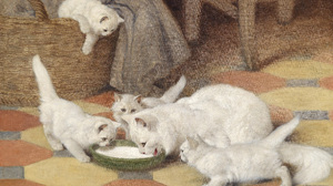 Baby Animal Cat Kitten Painting Pet 3927x2892 Wallpaper