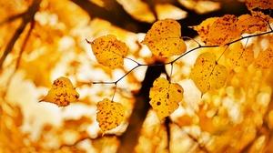 Blur Fall Leaf Nature 2048x1280 wallpaper