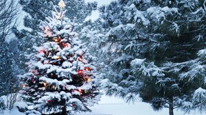 Christmas Lights Christmas Tree Forest Snow 3840x2160 Wallpaper