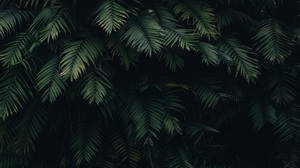 Nature Plants Green Leaves 1920x1280 Wallpaper