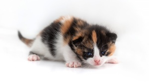 Cat Kitten 3840x2160 wallpaper