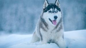 Winter Pet Snow Dog 2560x1706 Wallpaper