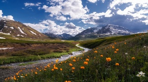 Landscape Mountain Nature Orange Flower Stream 1920x1248 Wallpaper