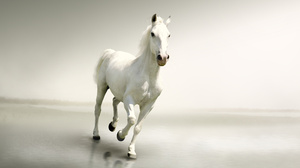 Animal Horse 4928x3264 Wallpaper