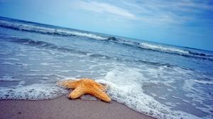 Horizon Ocean Starfish 3008x2000 Wallpaper