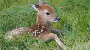 Cute Deer Fawn Grass 2560x1600 Wallpaper