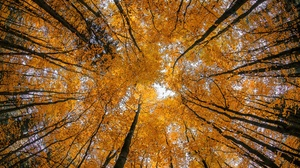 Fall Foliage Forest Nature Tree Treetops 2048x1365 Wallpaper