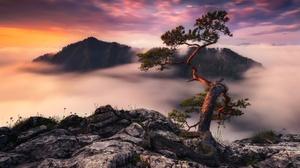 Fog Mountain Sunset Tree 1920x1280 wallpaper