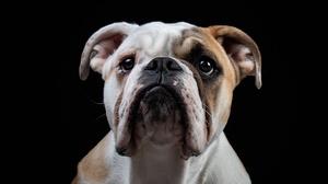 Dog Pet 3000x2000 Wallpaper