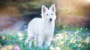 Dog Pet Flower Depth Of Field 2048x1367 Wallpaper