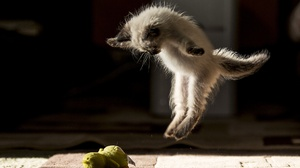 Cat Jump Pet 2048x1365 wallpaper