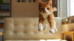 Cat Kitten Jump Animal 2048x1340 Wallpaper