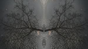 Reflection Branch Leaves 2043x1276 Wallpaper