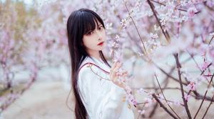 Cherry Blossom Asian 4032x2688 wallpaper