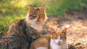 Bokeh Cat Pet 1920x1280 Wallpaper