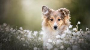 Dog Pet Baby Animal Puppy Flower 2000x1334 wallpaper