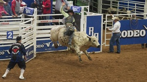 Bull Cowboy Rodeo Sport 3000x2184 Wallpaper